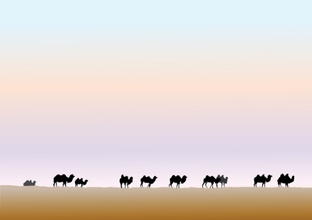 back lit: Camels Grazing