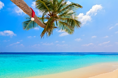 Santa hat is on palm tree,  Maldives, The Indian Ocean photo