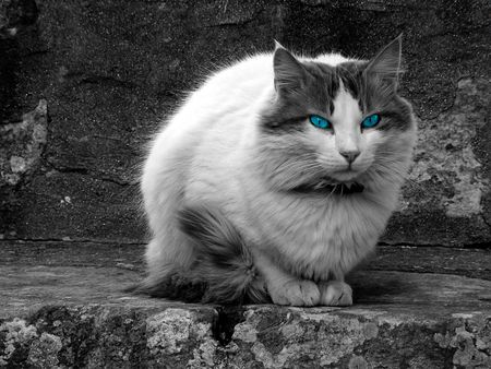 hypnotise: Cat