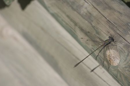 irridescent: Dragon fly resting in the sun on a wooden log with room for text Stock Photo