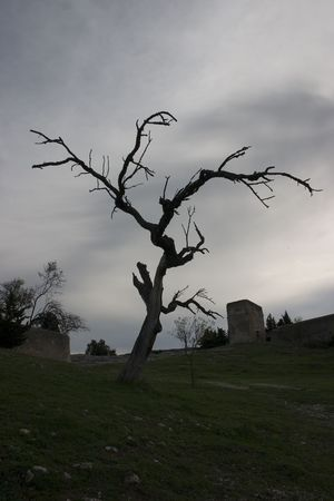 dispirited: Dead tree gives a picture of desolation against a dark and cloudy sky