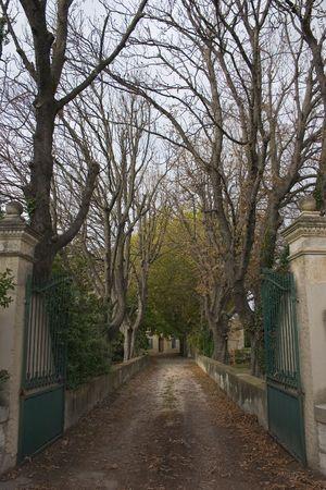 barren: Barren trees lining a driveway give a real sense of winter