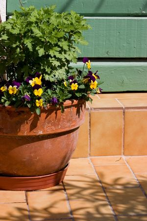 planter: Clay planter with pansies decorates an entrance