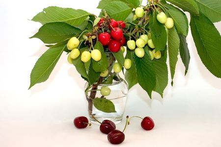 ripeness: Image of cherries at different stages of ripeness.