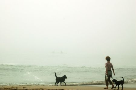 A woman walking her dogs on the beach Stock Photo - 255085