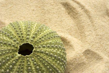 pilluelo: Green erizo de mar descartadas en una costa de arena - espacio para agregar texto.  Foto de archivo