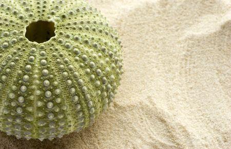 pilluelo: Detalle de un erizo de mar sobre la arena con el espacio a la derecha para agregar copia. Foto de archivo