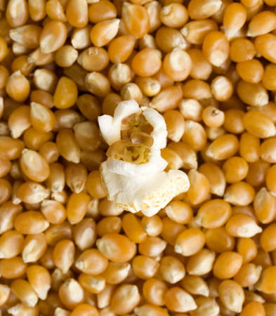 airy texture: A single piece of popcorn sitting on unpopped kernels, shallow depth of field.