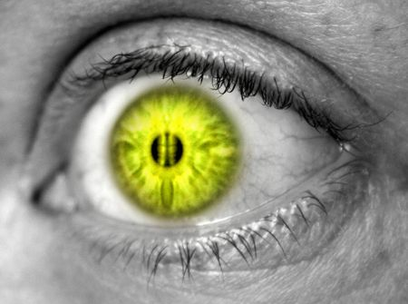 reverberation: Yellow eye against black and white skin