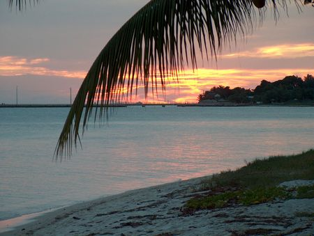 palm branch: Beautiful sunset with a palm branch in Key West Florida