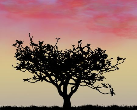 stunning: A stunning sunset with a silhouette of a tree