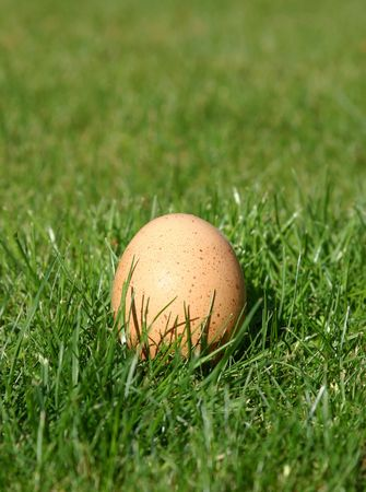 A New Laid Egg Stock Photo