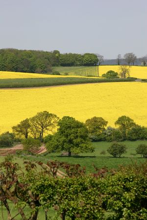 A View Of The English Countryside