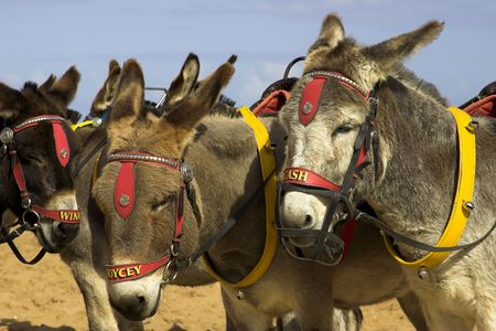 Donkeys on a beach at a U.K. holiday resort