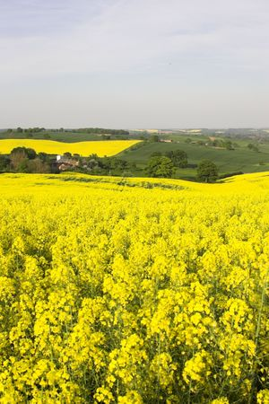 English Countryside Stock Photo - 3056906