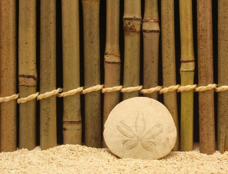 sand dollar: Sand Dollar en bamb�