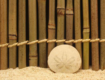sand dollar: Sand Dollar on Bamboo