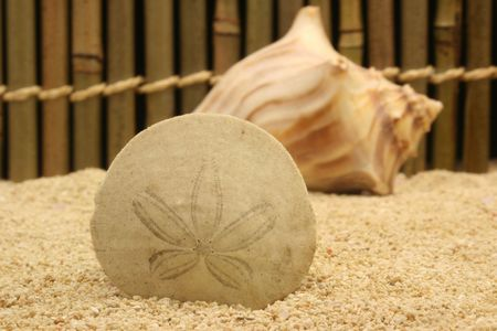 sand dollar: Sand Dollar and Shell, Shallow Depth of Field Stock Photo