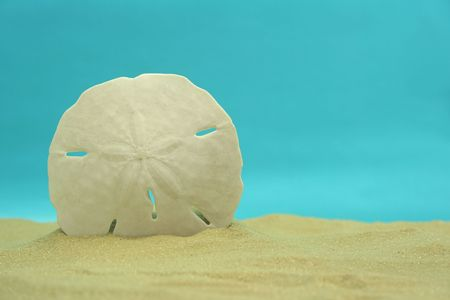 Sand Dollar on Sand With Blue Background
