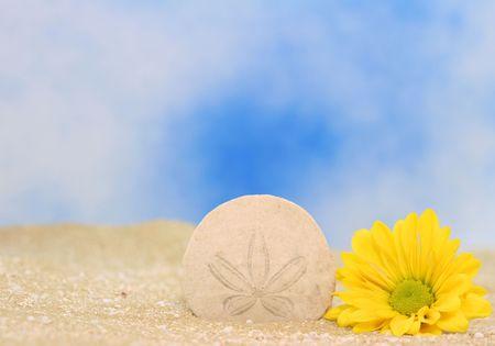 sand dollar: Sand Dollar y amarillo Daisy en la arena  Foto de archivo