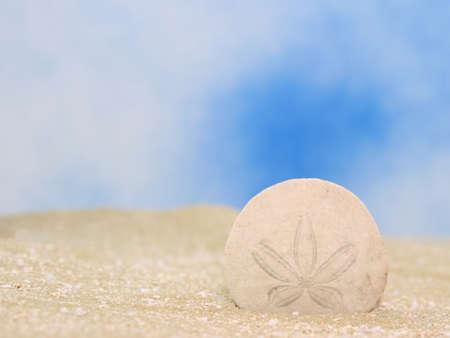 sand dollar: Sand Dollar sobre la arena con fondo azul cielo  Foto de archivo