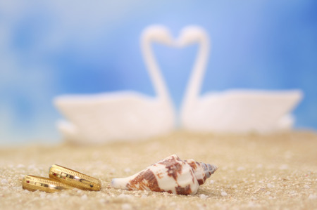 Wedding Rings and Sea Shell on Sand With Swans in Background