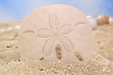 Sand Dollar on Sand With Blue Sky Background, Shallow DOF Stock Photo