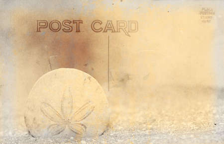 sand dollar: Vintage Grunge Estilo Postal Con Sand Dollar