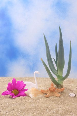 Aloe Vera Plant With Flower and Sea Shells on Sand Stock Photo