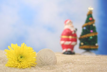 Flower and Christmas Tree on Sand, Shallow DOF, Focus on Sea Shell photo