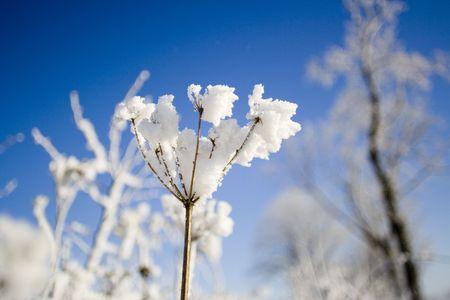 snow flower Stock Photo - 318072