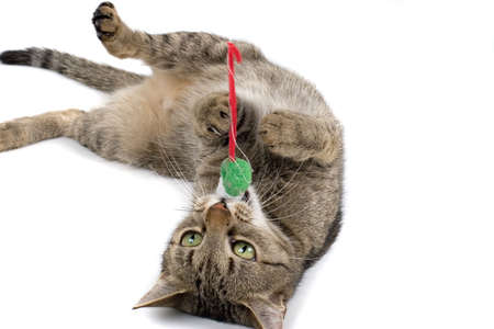 gato jugando: Gato jugando con el rat�n de juguete