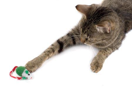 gato jugando: Cat jugando con el rat�n de juguete