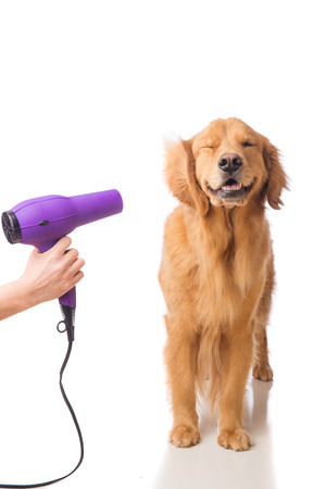 Groomer utilizando secador en un perro Foto de archivo