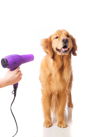 groomer: Groomer using blowdryer on a dog Stock Photo
