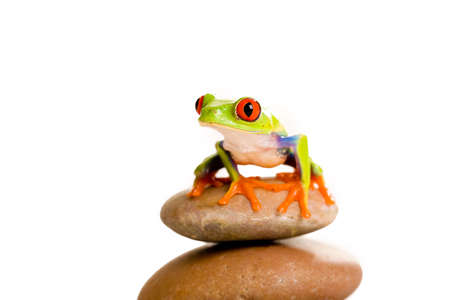 green frog: Frog on a stack of rocks