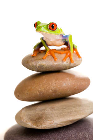 eyeing: frog on rocks Stock Photo