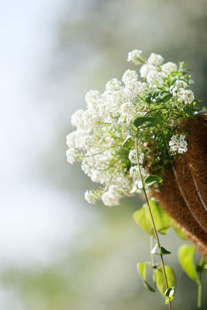 hanging basket: White flowers in hanging basket