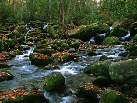 Moss covered Rocks in a stream
