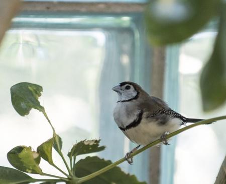 Closeup photo of a beautiful exotic bird Stock Photo - 21024093