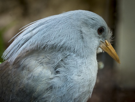 Closeup photo of a beautiful blue bird  Excellent detail in it s feathers Stock Photo - 21024118