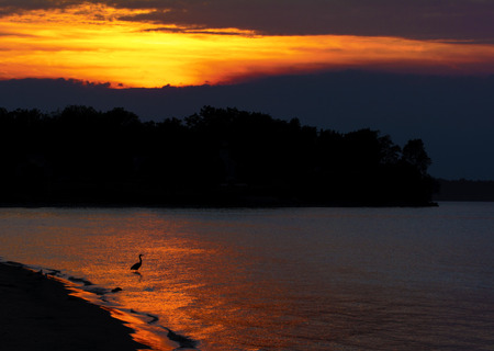 A beautiful warm  sunset  at the Sudus Bay beach park in New York. A Great Boue Heron is seen in silhouette in the glow of the sunset.  photo