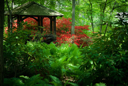 azaleas: Beautiful manicured shade garden with a Gazebo surrounded with blooming rhododendron and azalea bushes and large ferns