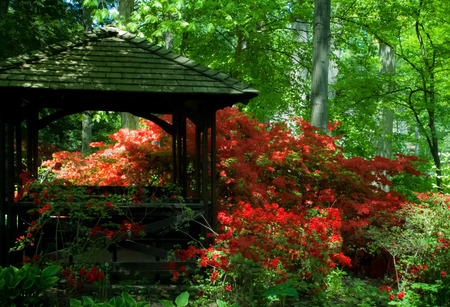azaleas: Beautiful manicured shade garden with a Gazebo surrounded by blooming rhododendron and azalea shrubs and trees and ferns  Stock Photo