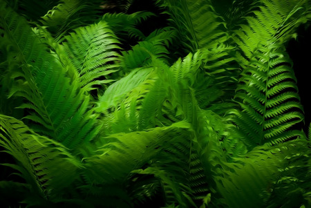 Beautiful green ferns with sunlight hitting them with oil painting effect