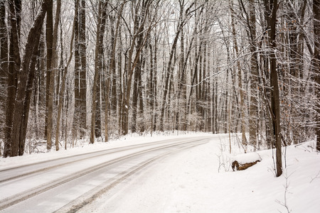 A snow covered road winds its way through a tree lined park.  Stock Photo