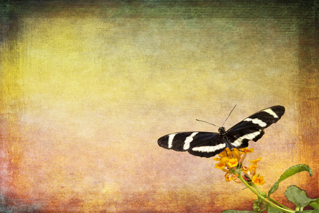 butterfly wings: Photo of a black white butterfly isolated and placed on a beautiful pastel colored grunge background. background.