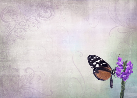 butterfly stationary: Isolated photo of a pretty orange and black butterfly resting on a flower n a garden and placed on a pastel vintage look background with decorative swirls.