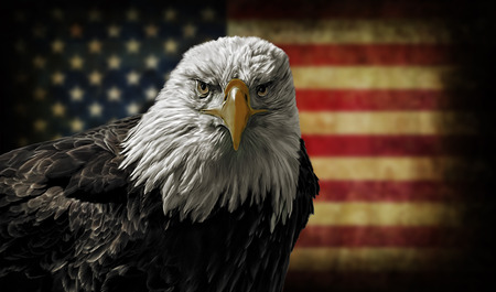 Oil painting of a majestic Bald Eagle against a photo of a battle distressed American Flag. photo