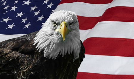 Photo of a majestic Bald Eagle against the American Flag. Stock Photo